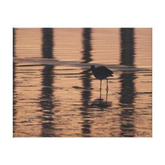 Gaviota en la puesta del sol lona envuelta para galerías