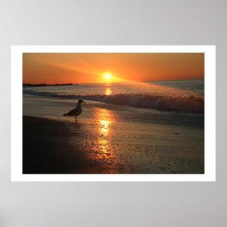 Gaviota en la salida del sol póster