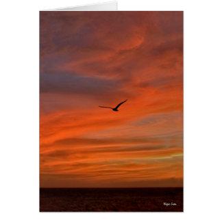 Gaviota en puesta del sol - costa de Tejas Tarjetón