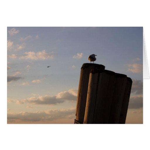 Gaviota en un poste en la puesta del sol tarjetón