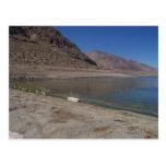 Gaviota en un registro por el lago walker tarjetas postales