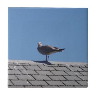 Gaviota en un tejado de pizarra azulejos cerámicos