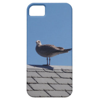 Gaviota en un tejado de pizarra iPhone 5 cárcasa