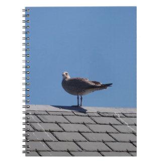 Gaviota en un tejado de pizarra libros de apuntes con espiral