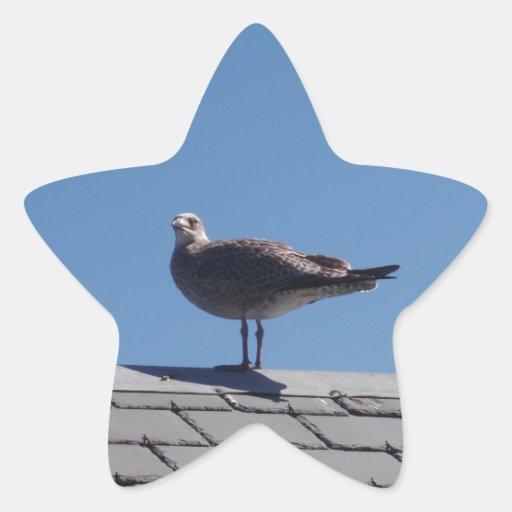 Gaviota en un tejado de pizarra pegatina en forma de estrella