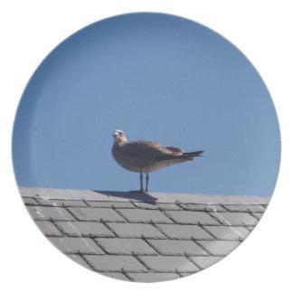 Gaviota en un tejado de pizarra plato de comida