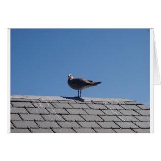 Gaviota en un tejado de pizarra felicitacion