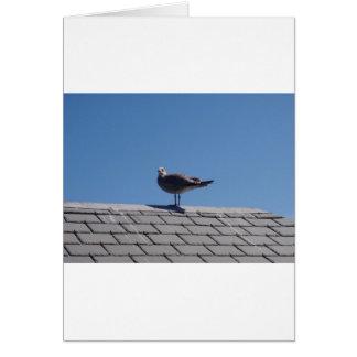 Gaviota en un tejado de pizarra felicitación