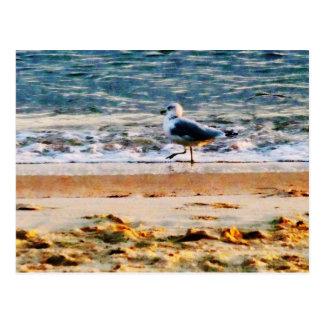 Gaviota en Virginia Beach en el amanecer Postal