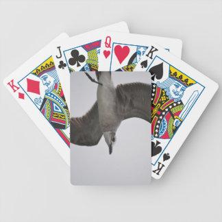 Gaviota en vuelo barajas de cartas