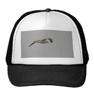 Gaviota en vuelo gorras