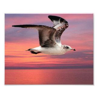 Gaviota en vuelo hermoso fotografías