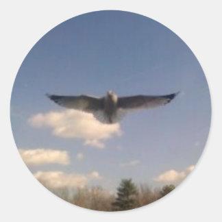 gaviota en vuelo pegatina redonda
