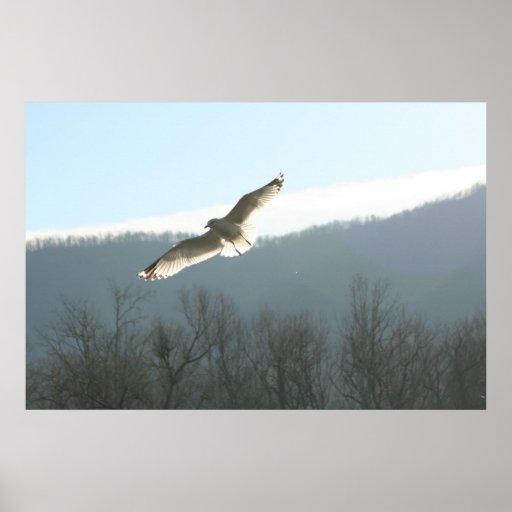 Gaviota en vuelo póster