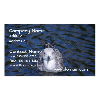 Gaviota flotante tarjeta de visita