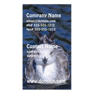 Gaviota flotante tarjeta personal
