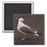 Gaviota - foto selectiva de la sepia del color imán de nevera