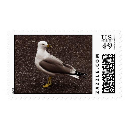 Gaviota - foto selectiva de la sepia del color sello