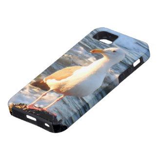 Gaviota hermosa en ondas funda para iPhone SE/5/5s