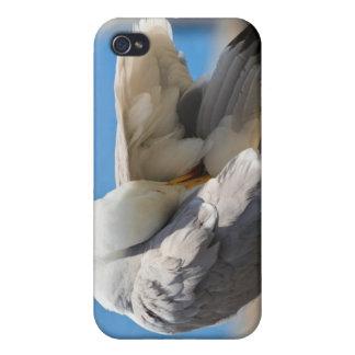 Gaviota iPhone 4 Carcasa