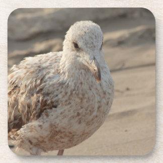 gaviota joven en la playa posavaso