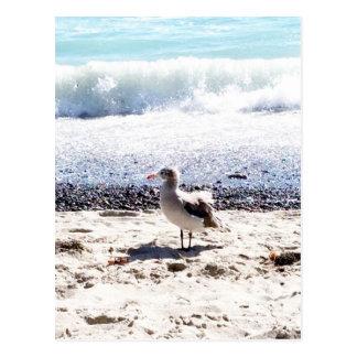 gaviota por el océano en la imagen de la playa postal