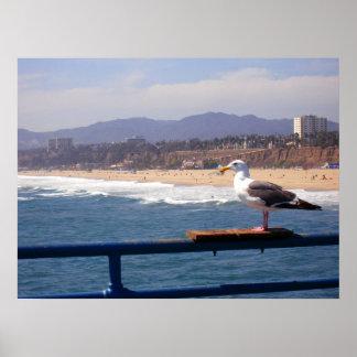 Gaviota por la playa de Santa Mónica Póster