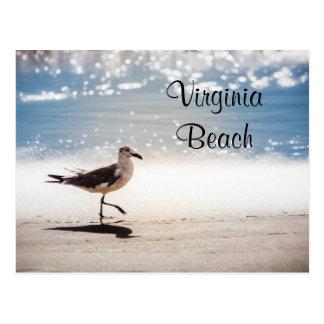 Gaviota que camina en Virginia Beach Tarjeta Postal