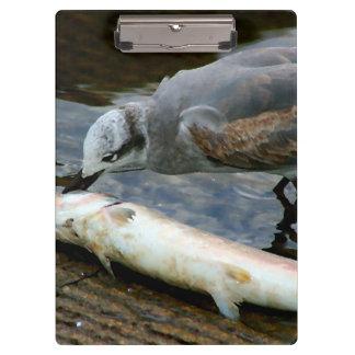 gaviota que come la pintura de los pescados