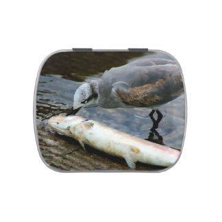 gaviota que come la pintura de los pescados jarrones de dulces
