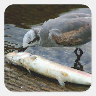 gaviota que come la pintura de los pescados colcomanias cuadradases