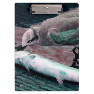 gaviota que come los pescados que pintan verde roj