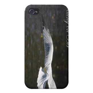 Gaviota que flota en el aire Iphone iPhone 4/4S Carcasa