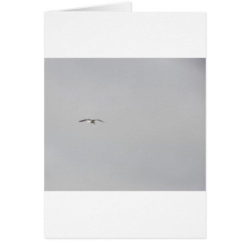 Gaviota que flota en un cielo gris felicitacion