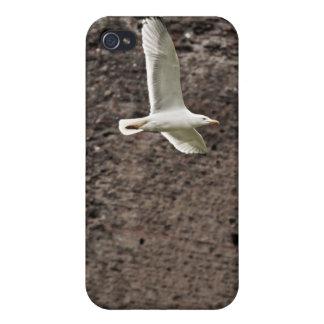 Gaviota que vuela libremente iPhone 4/4S carcasas