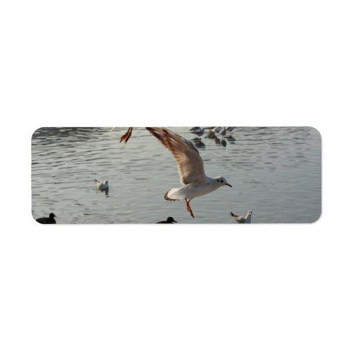 gaviota que vuela sobre el agua etiquetas de remite