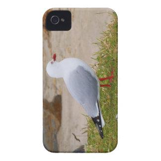 gaviota Rojo-cargada en cuenta Case-Mate iPhone 4 Carcasa