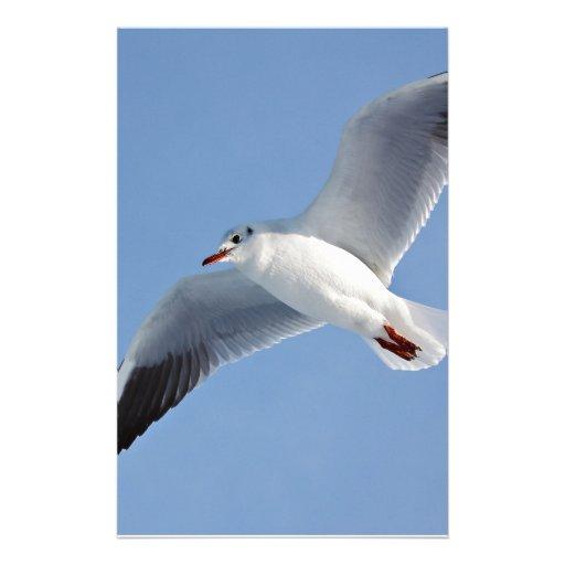 Gaviota, Sea/gull Papelería