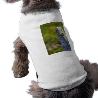 Gaviota vieja irritable añada su propio texto camisetas mascota