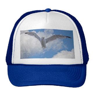 Gaviota y nubes del vuelo gorro