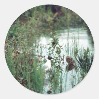 Gaviota y polluelo de Bonapartes Etiqueta Redonda