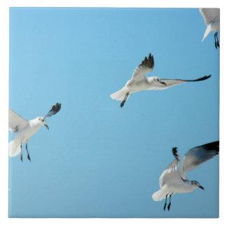 Gaviotas blancas que vuelan la teja