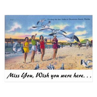 Gaviotas de alimentación, playa de Clearwater, la Postal