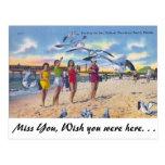 Gaviotas de alimentación, playa de Clearwater, la  Tarjetas Postales