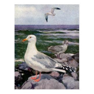 Gaviotas de arenques en línea de la playa rocosa tarjetas postales
