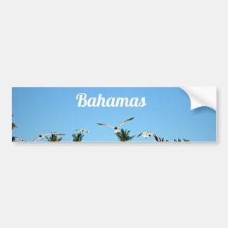 Gaviotas de Bahamas que vuelan sobre los cielos az Pegatina De Parachoque