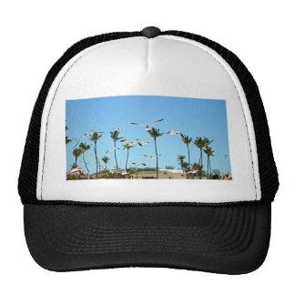 Gaviotas de Bahamas que vuelan sobre los cielos az Gorras De Camionero