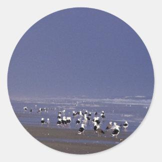 Gaviotas de espalda negra en la línea de la playa pegatinas redondas
