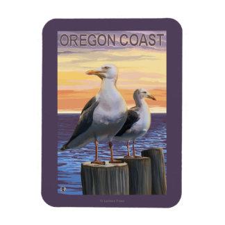Gaviotas de la costa de Oregon Imanes