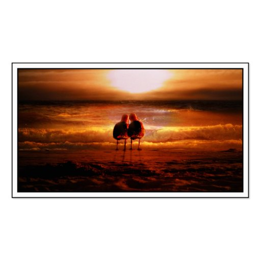 Gaviotas de la puesta del sol - pájaros del amor e